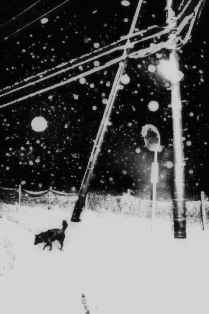 Snowflakes Dog Man - Hajime Kimura - Print 1